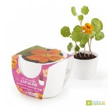 Mini zahrádka - Mini květináč Ceramic s lichořeřišnicí