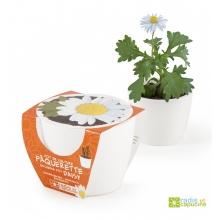 Mini zahrádka - Mini květináč Ceramic s kopretinou