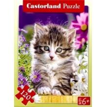 CASTORLAND Puzzle Koťátko mezi květinami 120 dílků