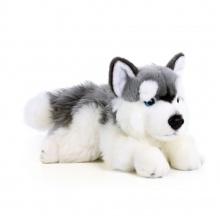 Plyšový pes husky ležící, 30 cm (od 0 let)