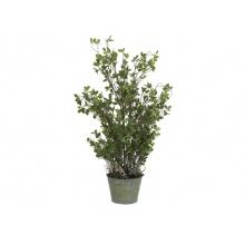 Evergreen keřík 120 cm