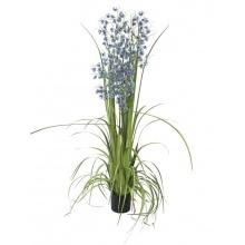 Orchidej modro-fialová v trávě, 140 cm